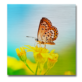 photogift-metalprint