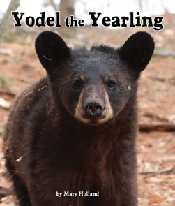 Yodel_295